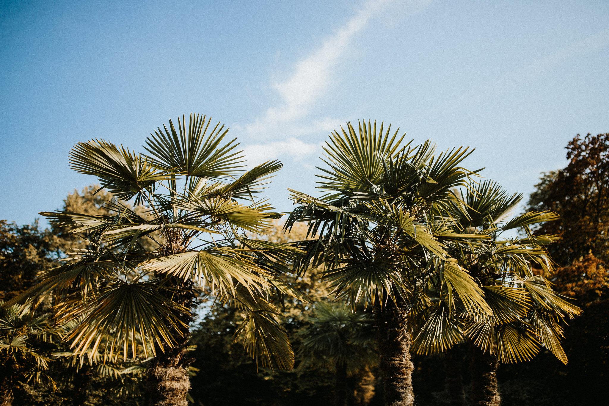 hochzeitsfotograf muenchen palmenhaus 089
